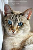 Blue Eyes by mentaldragon
