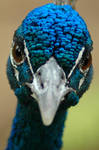 Indubidably Blue by mentaldragon