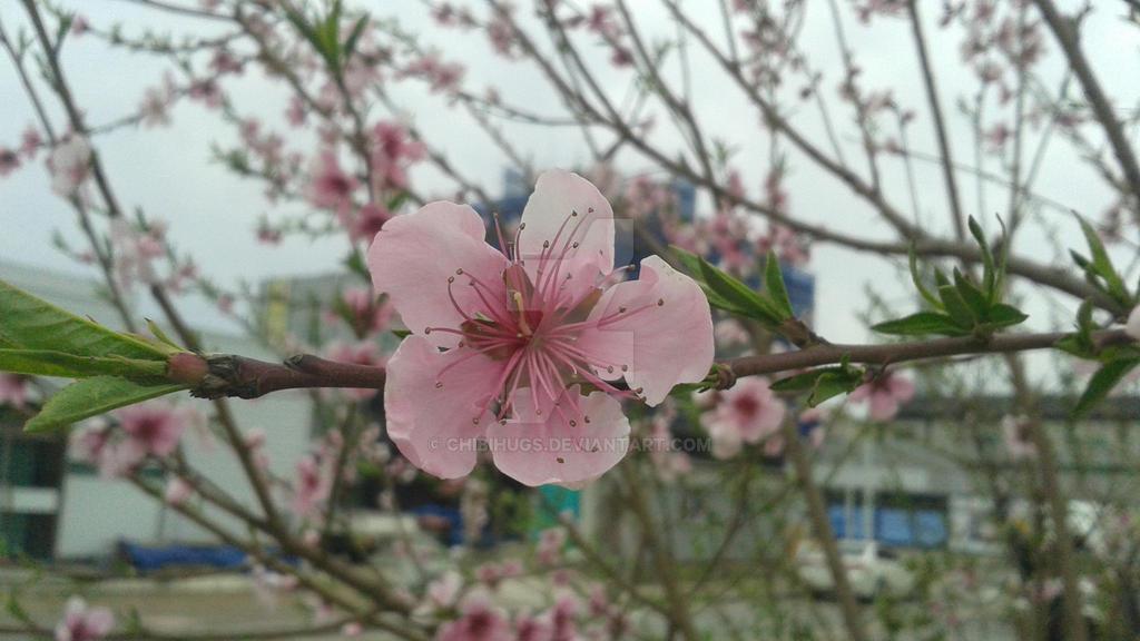 Pink by ChibiHugs