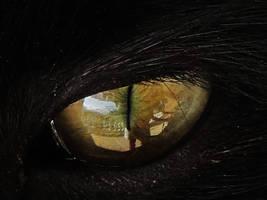 The cat's eye-2 by DragonflyAndromeda