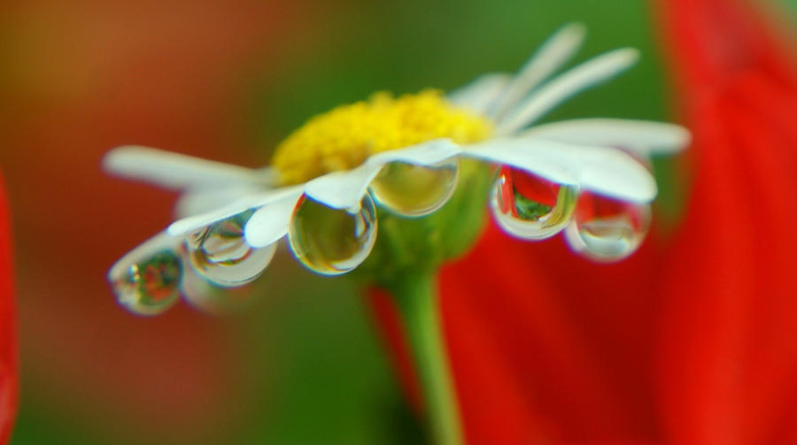 Drops attraction by DragonflyAndromeda