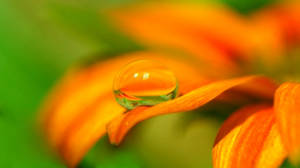 Sweet drop by DragonflyAndromeda