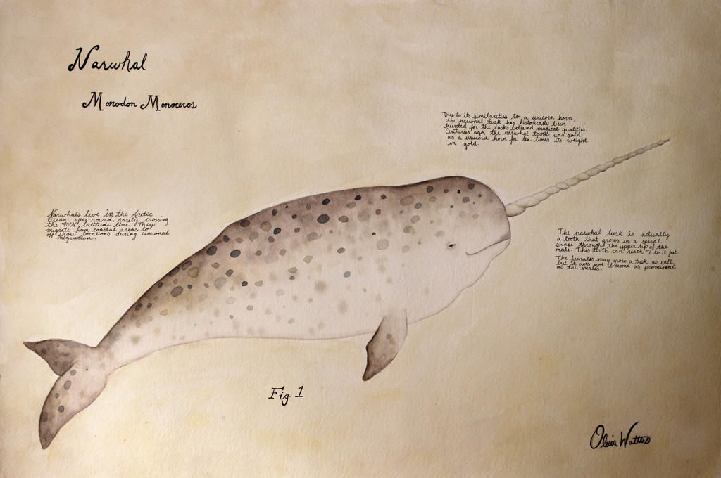 Narwhal 1 by Olevia