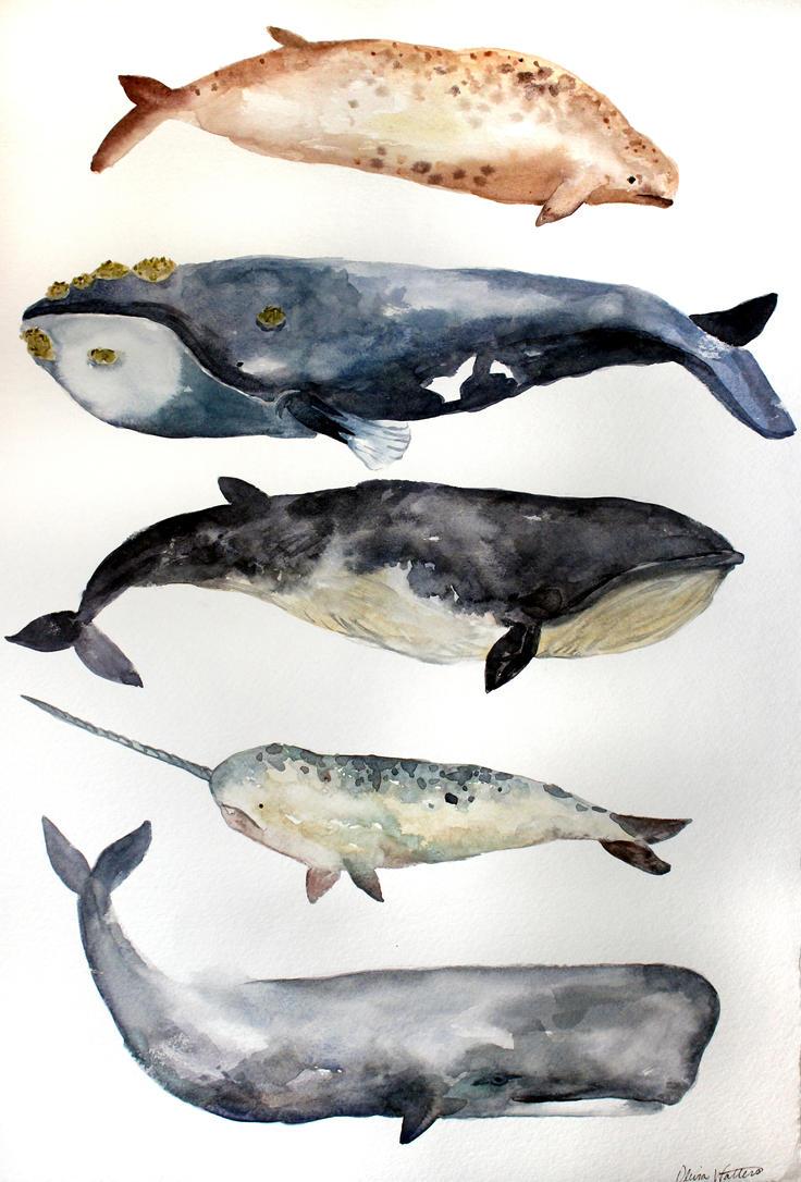 Whale Study by Olevia