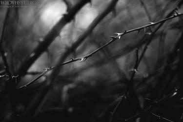 Dear Darkness II - bw by wroth