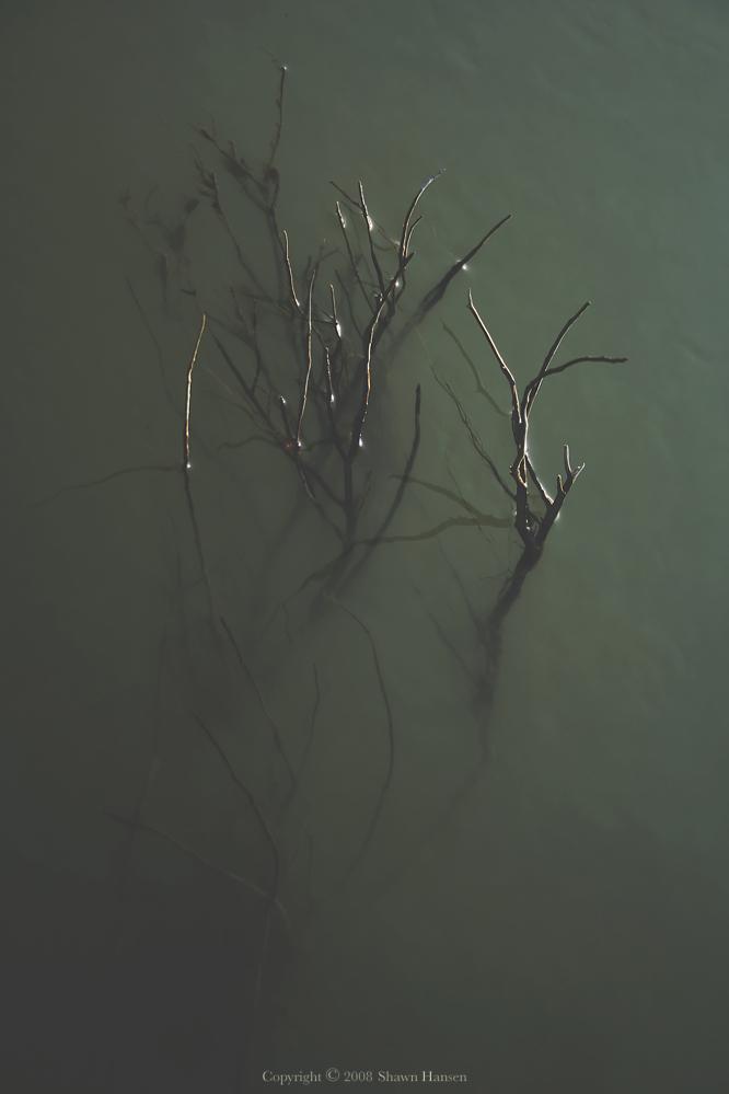 Iphigenia by wroth