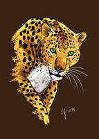Leopard by The-Black-Panther