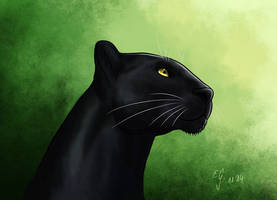 Panther by The-Black-Panther