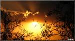 Stare at the Sun
