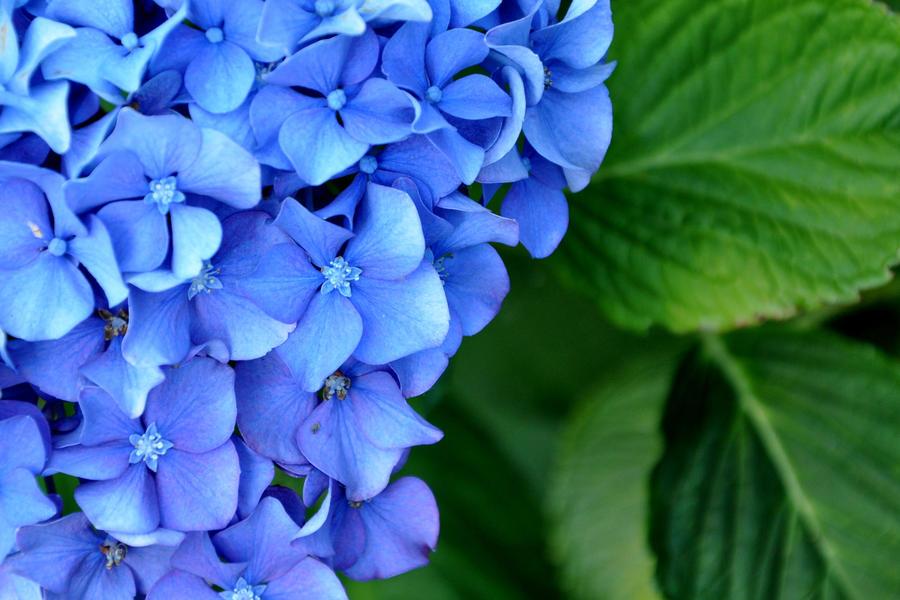 Blue by BeachGirlNikita