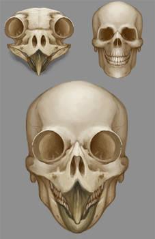 Anatomicae 26 - skull hybid studies
