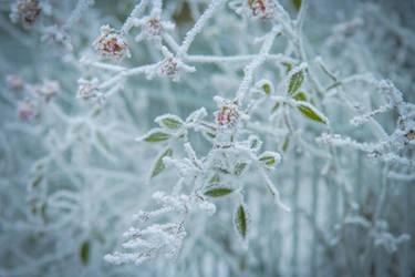 Frozen by SashaBels