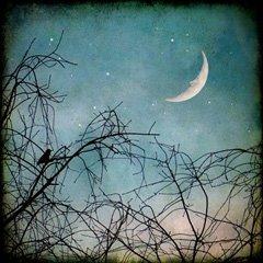 Night by Jonathan203