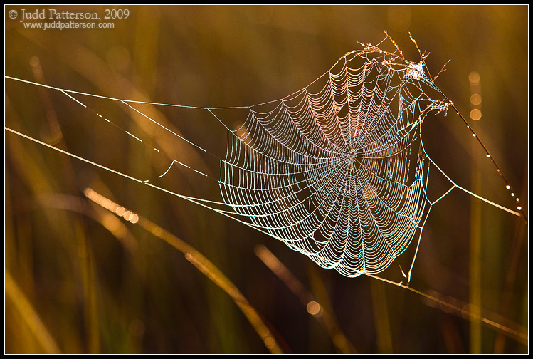Morning Web by juddpatterson