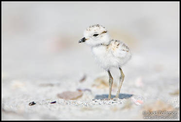 Little Fuzzball by juddpatterson