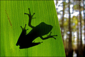 Tree Frog Silhouette