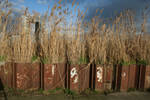 Reeds behind Metal chipped and rusted Fencing
