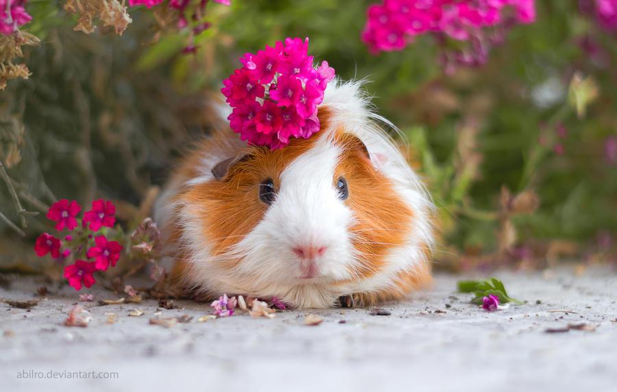 Flower on Piggie's Head by ABilro