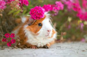 Flower on Piggie's Head II by ABilro