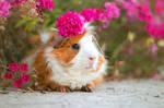 Flower on Piggie's Head II