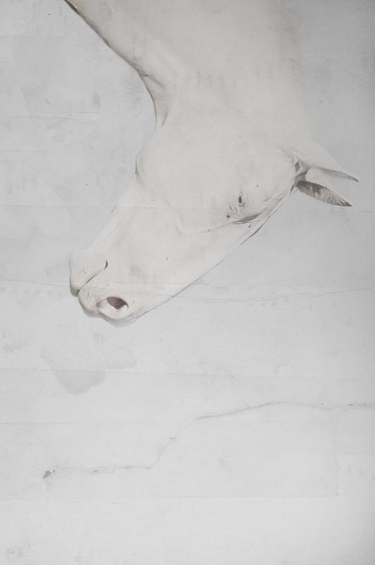 Albino Horse by ktesnuko on DeviantArt - photo#12