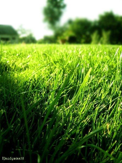 Grass by Hurricane007