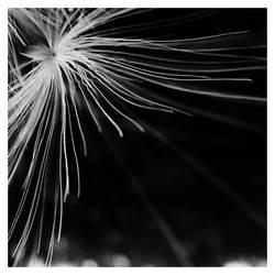 Wires by leoatelier