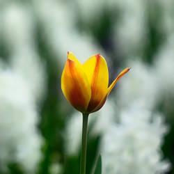 Yellow by leoatelier