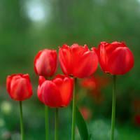 Red by leoatelier