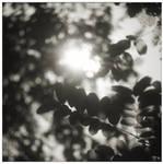 Poetries III by leoatelier