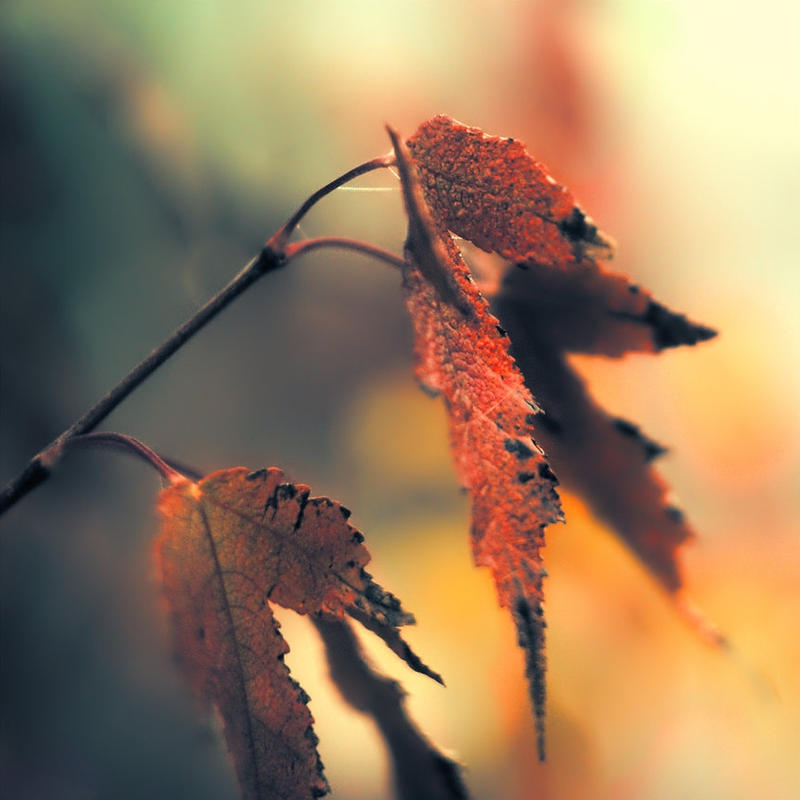 Autumn story by leoatelier