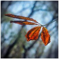 Four seasons by leoatelier