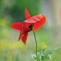 Flower in the park by leoatelier