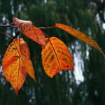 Autumn is still here