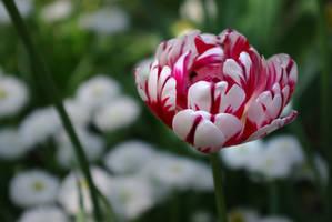 Beautiful memories I by leoatelier
