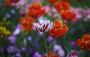 Beautiful memories VI by leoatelier