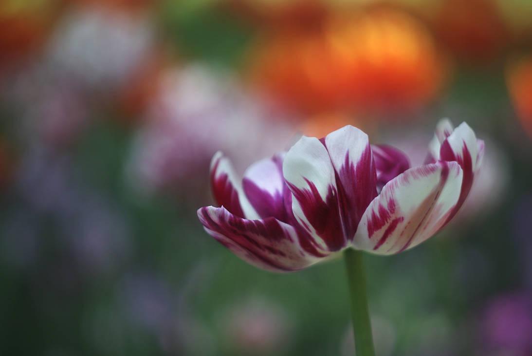 Beautiful memories IX by leoatelier