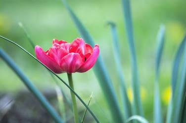 Spring_12 by leoatelier