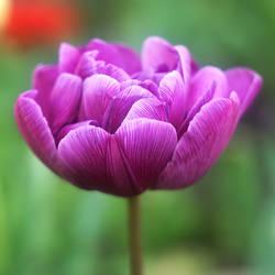 Spring_14 by leoatelier