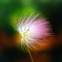 Blowing in the wind by leoatelier