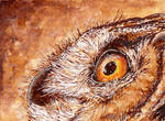 Coffe Owl ACEO