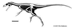 Sinocalliopteryx skeletal