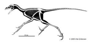 Anchiornis skeletal by Dinomaniac