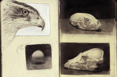 Moleskin studies by Dinomaniac