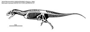 Majungasaurus skeletal