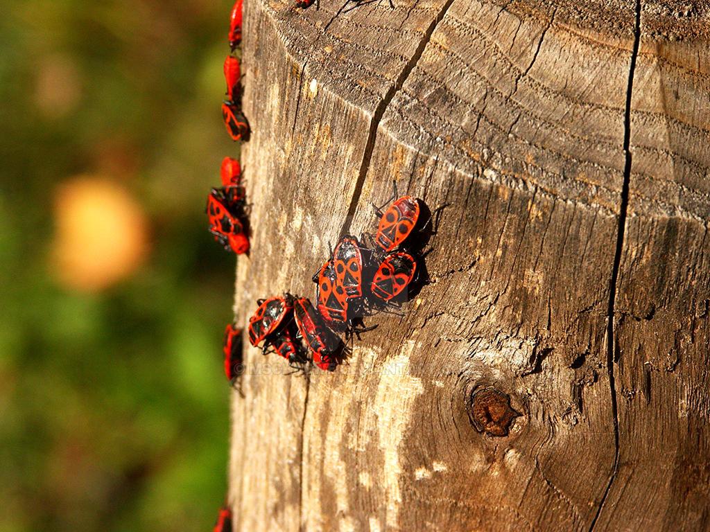 Bugs1 by MSchneWe