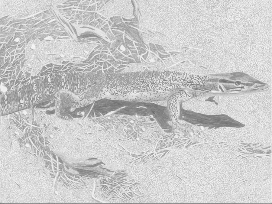 Lizard by Gwyvern