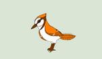 Orange Jay