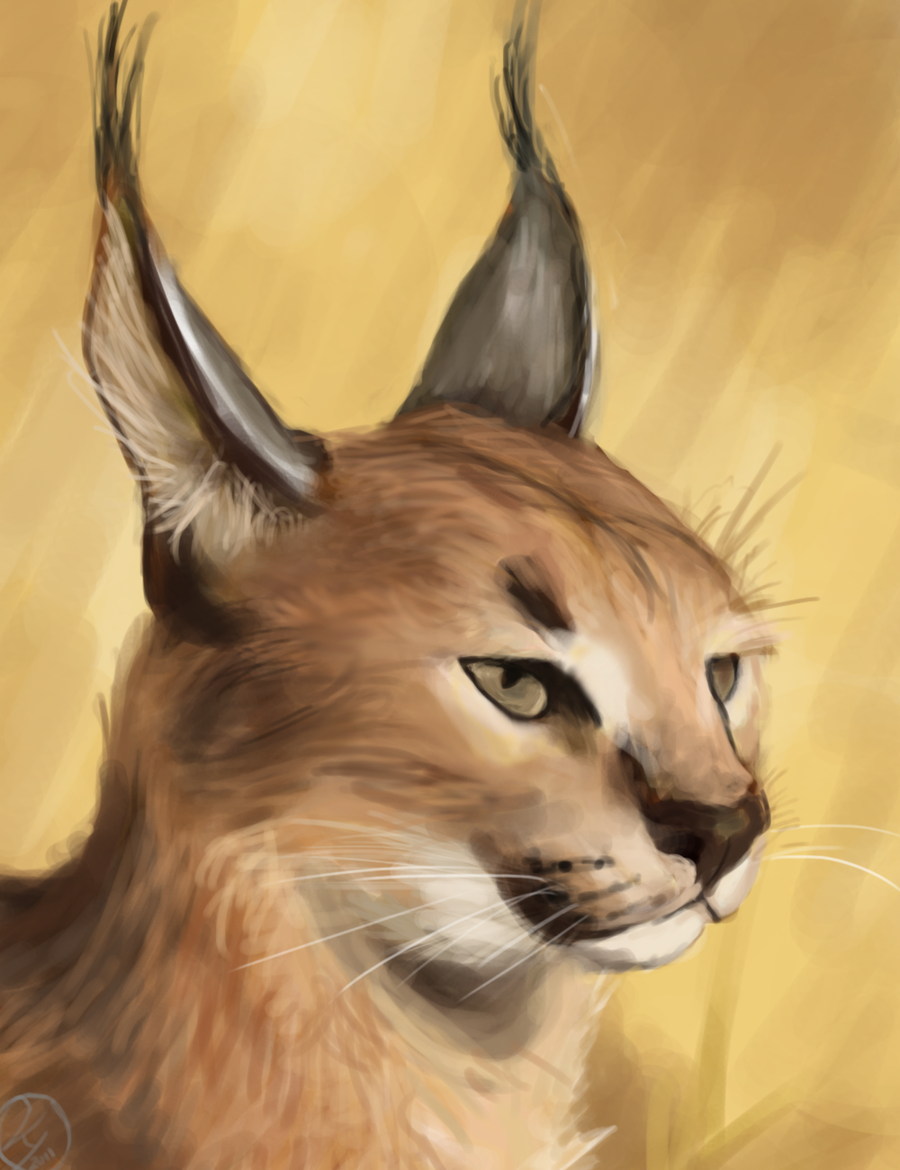 Caracal drawing - photo#15