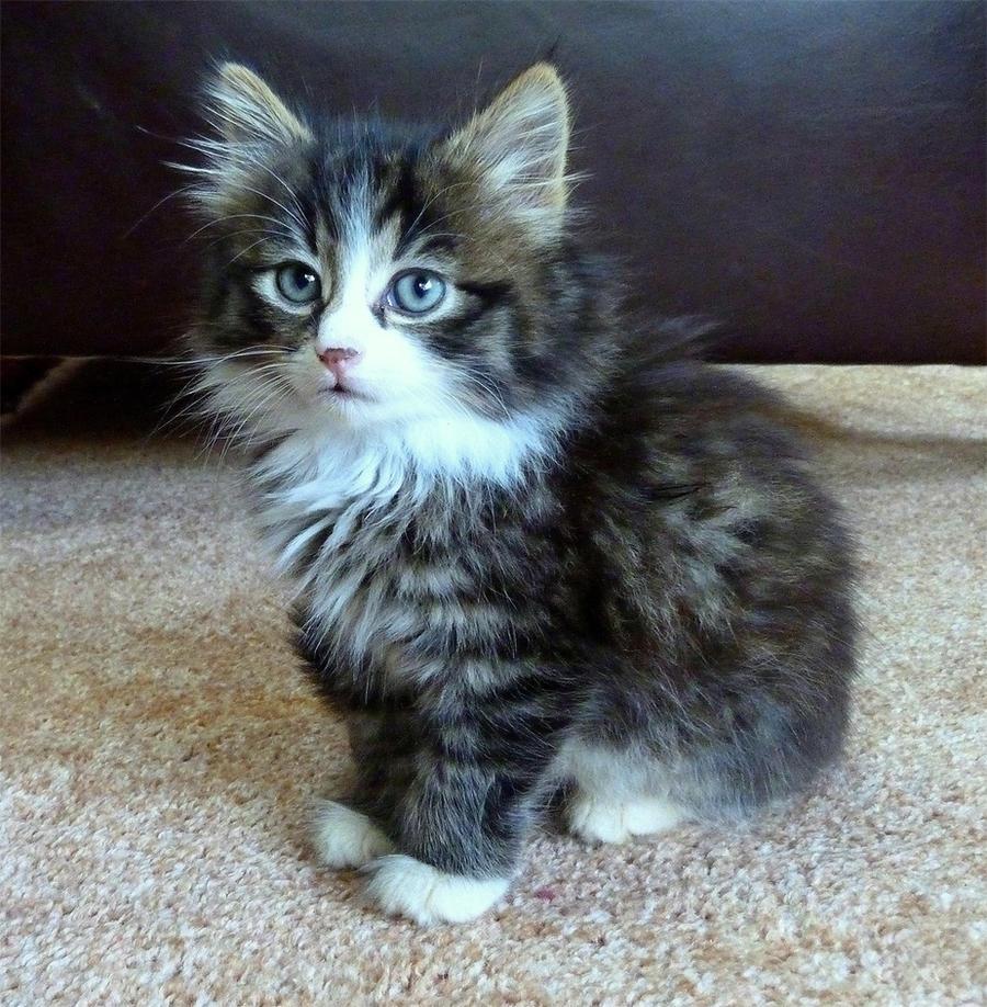 Kitty by Kalenka